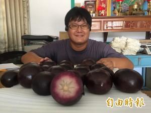 找出「閃過颱風」的農作   台東農友多元嘗試