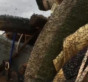 慎入!澳洲沙漠探險好吃驚 數以千計蒼蠅飛撲而來