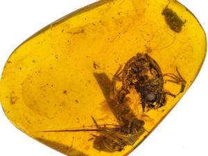 超罕見!科學家發現9900萬年前青蛙化石