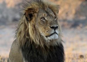 不爽被伸手亂摸 獅子「突然一吼」嚇翻白目遊客