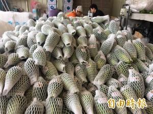 高雄木瓜外銷首度進軍新加坡 帶動今年出口成長