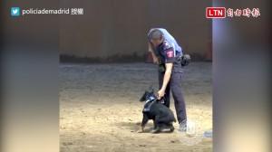 這樣賣萌真的沒問題嗎? 警犬CPR影片融化百萬網友的心