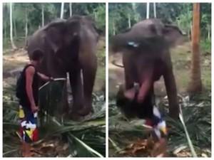 不爽用餐頻被騷擾 大象「一鼻」把遊客掃飛