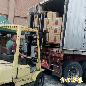 台東鳳梨外銷中國 今年首批16.8噸裝櫃銷無錫