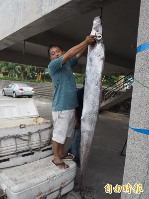 誇張!台東漁民2天之內捕獲15條地震魚