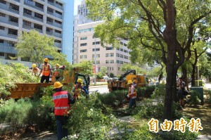 強颱瑪莉亞來襲 台北市完成行道樹修剪