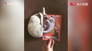 貓咪也瘋錯位照! 完全融入海報竟毫無違和感
