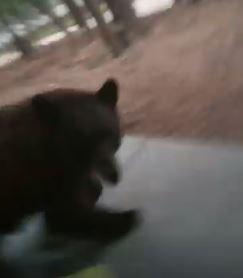 男子開門拍愛犬 頭一轉驚見大棕熊怒吼衝過來