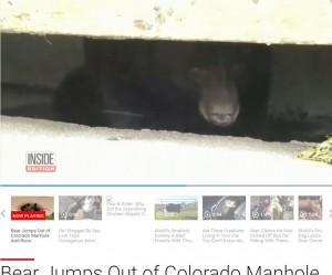 水溝裡一雙眼睛盯著看  竟是113公斤大棕熊
