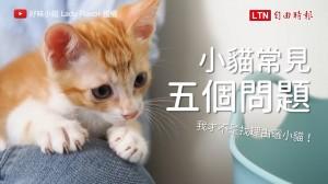 小貓的五個常見問題 原來被咬的時候要這樣處理!