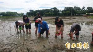 台南新東國小種校慶米 採微生物菌自然農法
