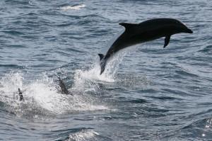 悲!沙灘上發現海豚遺體 解剖後驚覺牠懷孕並遭槍殺