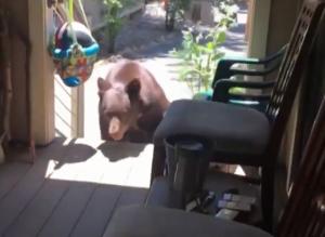 大黑熊二度闖廚房 95歲阿嬤兇悍趕跑它
