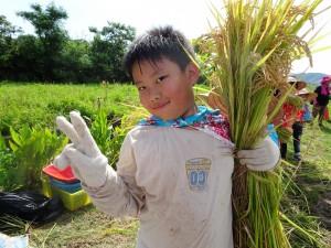 幼兒園幼童割稻   才知粒粒真辛苦