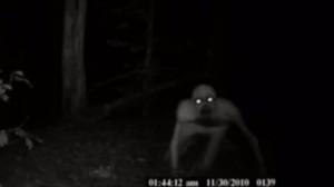 看到可愛小鹿拿手機拍下  詭異生物卻入鏡  網驚:是咕嚕!