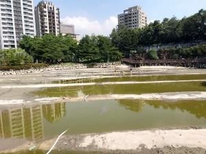 豐樂公園水池清淤 動物暫時搬家