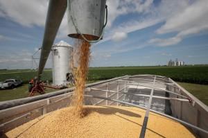 中國大連港官員證實 美國大豆11日就開始卸貨