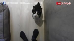 誰說貓咪叫不來? 用對方法讓牠們隨傳隨到!