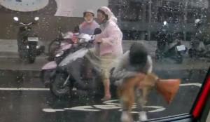 最美風景!視障犬困路中央淋雨... 女騎士挺身解危