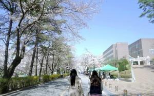 驚!首爾中央大學新生失蹤多天 校區內赫見腐爛遺體