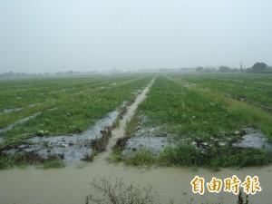 高雄豪雨農漁牧損失1617萬元 菜價上漲1成7