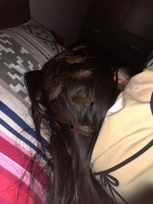 真的不想活了!  他在熟睡女友頭上放滿「蟑螂」