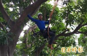修樹也要學爬樹! 香港攀樹冠軍跨海傳授樹木修剪撇步