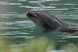 水族館倒閉留動物等死? 海豚倦容曝光引撻伐