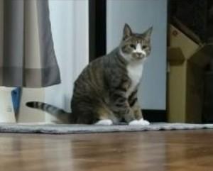 貓咪討厭被擦屁屁偷用地墊自己來 網驚:有練過