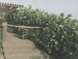 癌男久病厭世 竹圍漁港上吊身亡