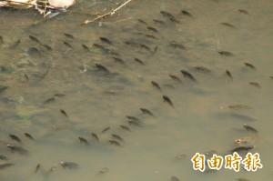 防季節性水中溶氧量致魚群暴斃 專家︰有解