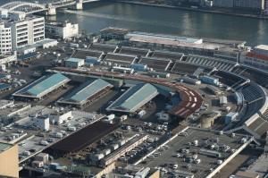 日本築地市場下月搬遷 數萬老鼠蠢動