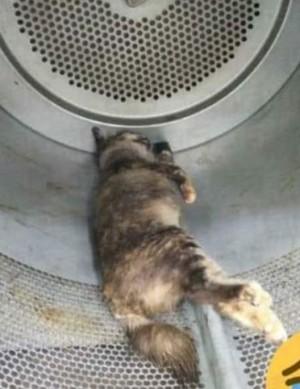 惡劣!2男把懷孕母貓丟進烘衣機 狂投幣活活烘死