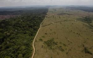 前NASA科學家創衛星公司 幫抓雨林非法盜伐