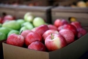 澳洲藏針事件擴大至蘋果!農民無奈買金屬探測器檢測
