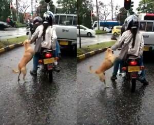 忍不住掉淚!情侶路上棄養狗 牠卻覺得主人在和自己玩