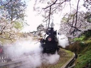 屹立106年! CNN讚嘆:阿里山森林鐵路令人驚艷