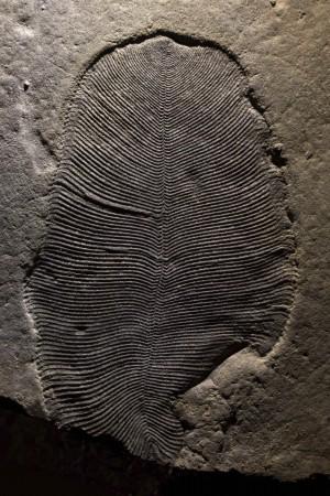 距今5.58億年前 最古老的動物化石長這樣...