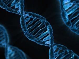 人類受精卵基因編輯 日本明年可能解除禁令!