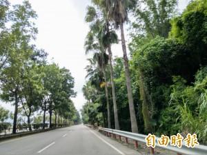 大型落葉危人車 台16線集集段椰子樹要全移除