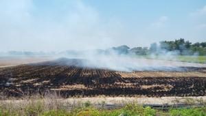 加速稻草分解提升肥力 農委會提供良方