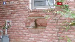 磚牆縫隙有蜜蜂! 沒想到牆內竟住著超大蜜蜂家族