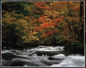 日本最佳紅葉名勝 日媒調查:第一名不是京都嵐山!