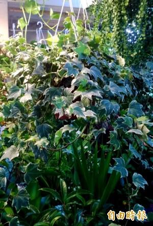 改善家中空氣品質!英國研究發現要放這2種植物...