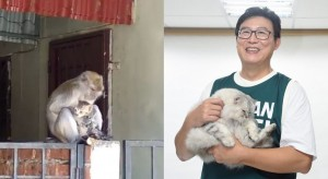 獼猴當母貓面綁架小萌貓 網友大驚:「比憨智還會抱」