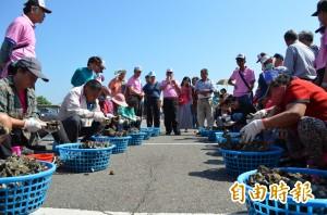 台南鱻漁產業文化活動登場 刮魚鱗剖蚵仔競賽有趣
