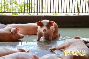 中國非洲豬瘟疫情再添一起 加上重慶共14省市淪陷