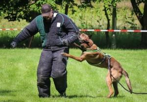 「太兇悍」無法安排收養 英國10年撲殺800軍犬