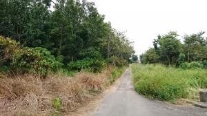 空污嚴重時又要砍樹?   里長帶頭反對台糖造林地標租
