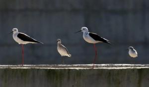 在大自然賞鳥益處多! 專家:紓壓、長壽、改善心血管疾病